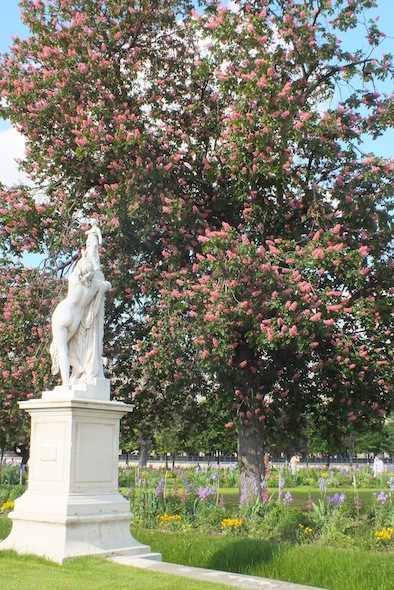spring_paris_jardin_tuileries-01