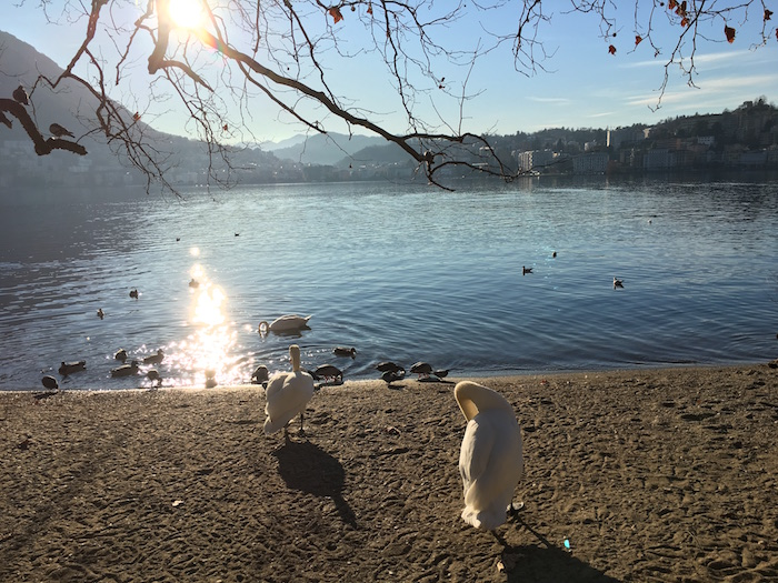 lugano-lake-switzerland-december-2015-06